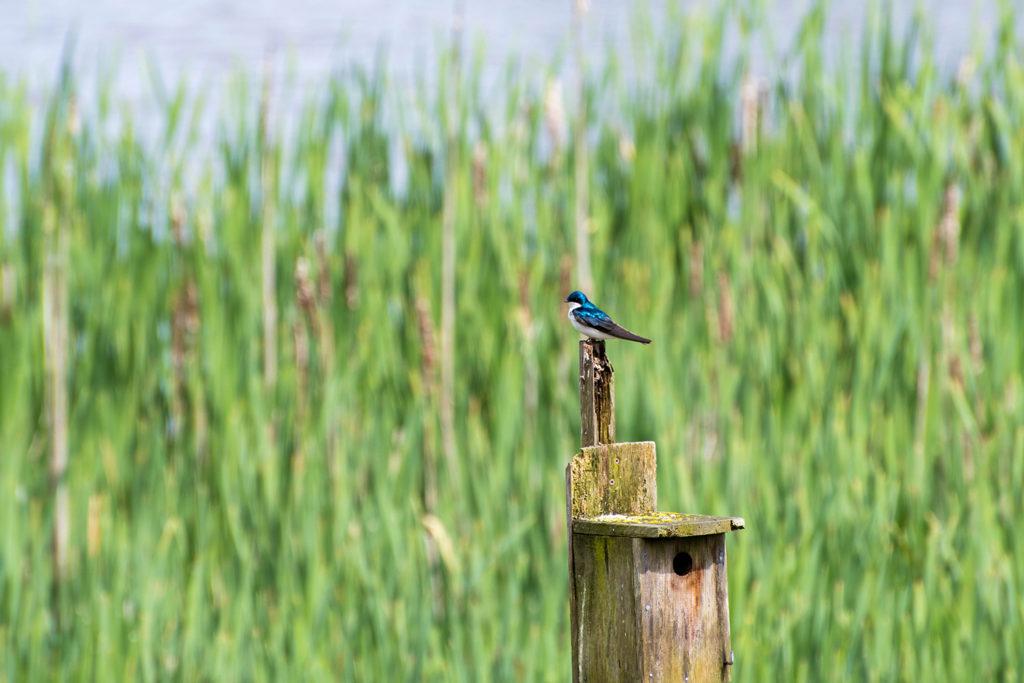 The Reifel Migratory Bird Sanctuary